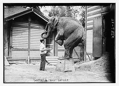Elephant Doing Trick