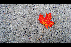 Red maple leaf against concrete