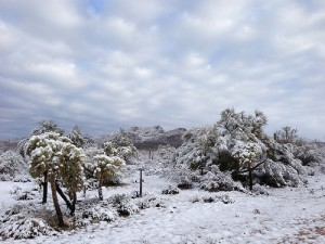 Arizona Blizzard 2013
